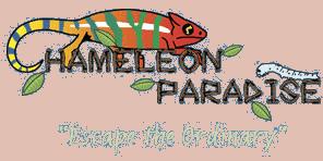 chameleonparadise.com